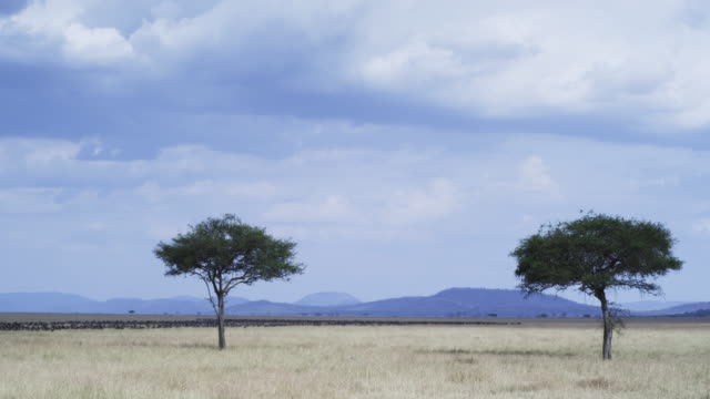 WS savannah with Wildebeest migration in background