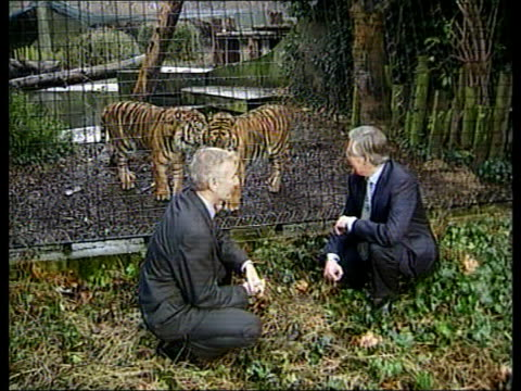 england london london zoo michael meacher mp posing in front of tiger enclosure tms meacher and derek fatchett mp squatting in front of enclosure cms... - central london video stock e b–roll