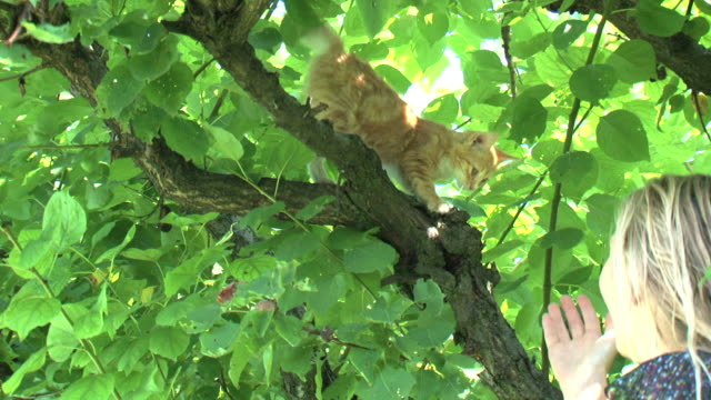 saving my kitten on the tree - rescue stock videos & royalty-free footage