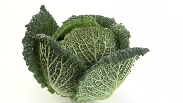 zi, ecu, savoy cabbage on white background - cabbage stock videos and b-roll footage