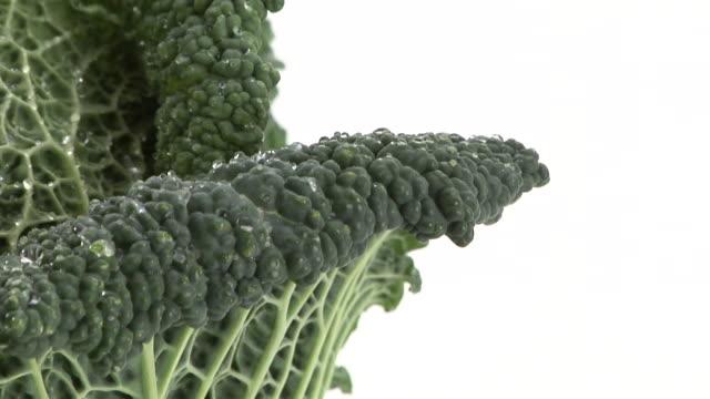 ecu, zo, savoy cabbage on white background - savoy cabbage stock videos & royalty-free footage