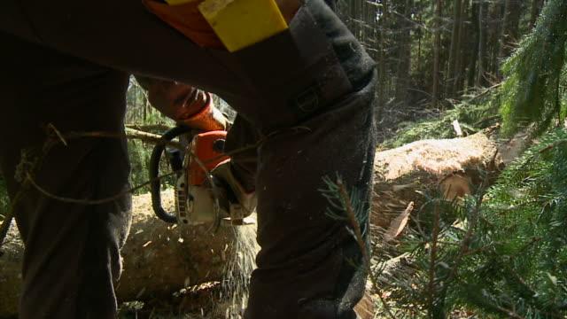 vídeos de stock, filmes e b-roll de hd câmera lenta: sawdust - forester