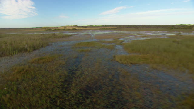 Sawgrass covers swampland in the Everglades.