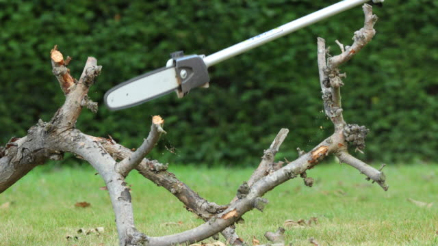 sawing a branch with a gardening chainsaw. - lawn stock videos & royalty-free footage