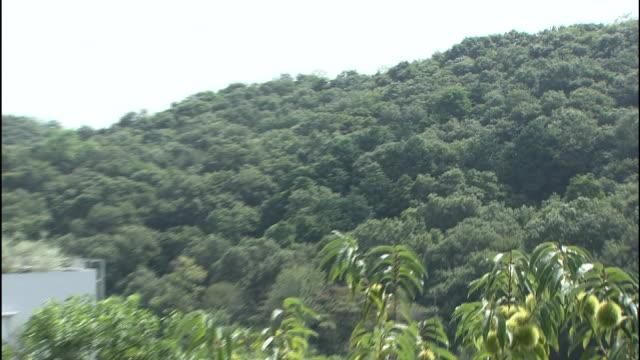 Sayama Hills is filled with dense vegetation in Saitama-ken Tokorozawa-shi, Japan.