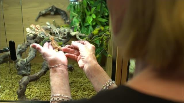 says people are not preparing properly when choosing exotic pets; england: int lizard looking through open door of terrarium green lizard in... - itvイブニングニュース点の映像素材/bロール