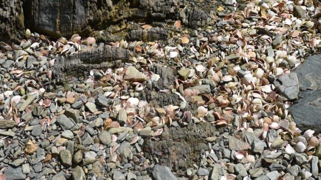 scallop shells left on the beach, pen ar roz. - david johnson stock videos & royalty-free footage