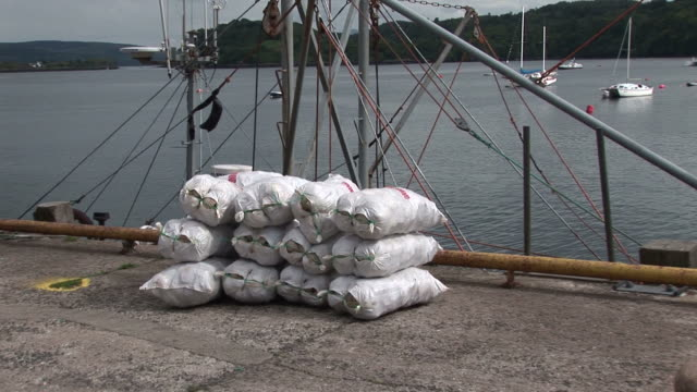 stockvideo's en b-roll-footage met scallops in bags loaded at quayside. tobermory. mull. scotland - mull