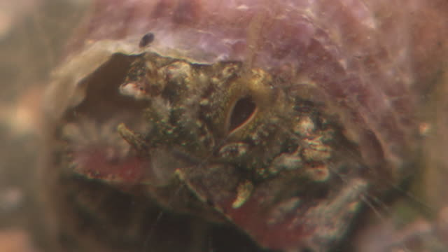 scaly worm shell's mouth - scaly stock videos and b-roll footage