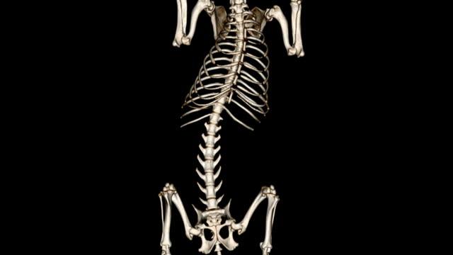 cat scan of dog skeleton - animal vertebra stock videos and b-roll footage