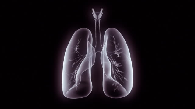 mri scan of the human lung - human lung stock videos & royalty-free footage