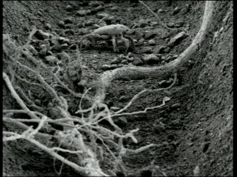 scanning electron micrograph of soil mite and plant roots - magnification stock videos & royalty-free footage