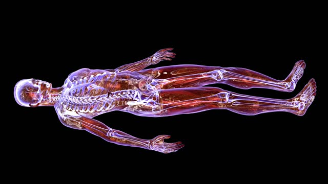 mri scanning of the human body - limb body part stock videos & royalty-free footage