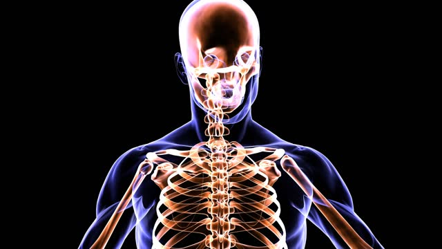 scanning the human skeletal system - biomedical illustration stock videos & royalty-free footage
