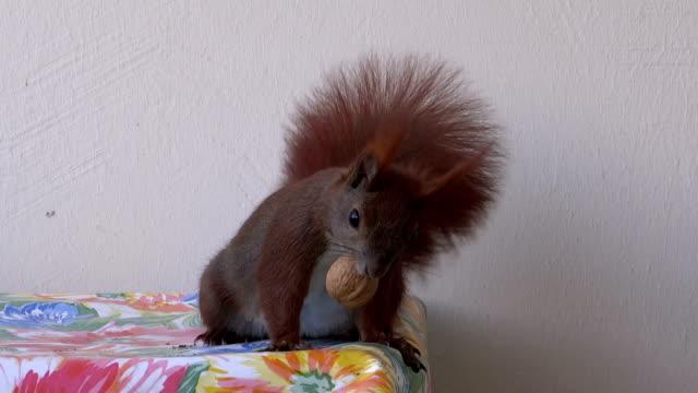 Scared squirrel