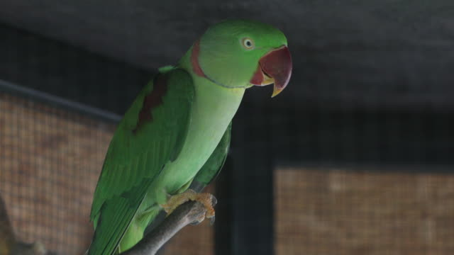 scarlet macaw - scarlet macaw stock videos and b-roll footage