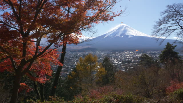 scarlet maple leaves being blown by winds with mt. fuji in the background. - maple leaf stock videos and b-roll footage