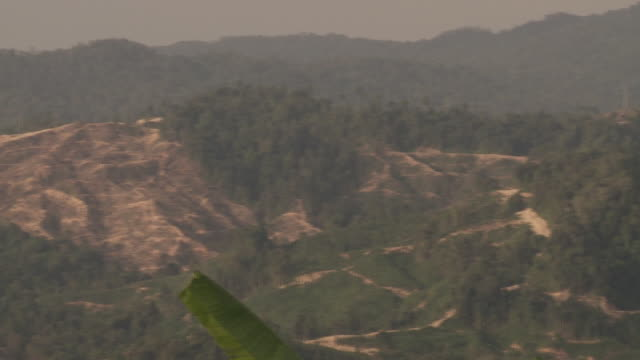 Scarred landscape where deforestation has taken place