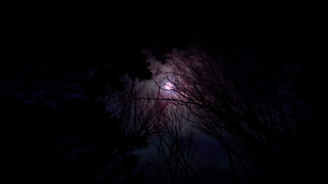Scary bloody red moon in the forest