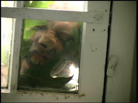 vídeos y material grabado en eventos de stock de scary ladrón de casas - ladrón de casas