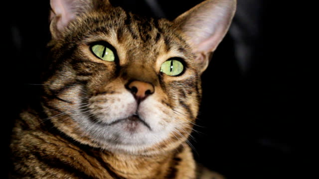 scary cat - cat blinking stock videos & royalty-free footage
