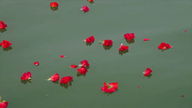 scattered flowers floating in ganga river, india - pellegrinaggio video stock e b–roll
