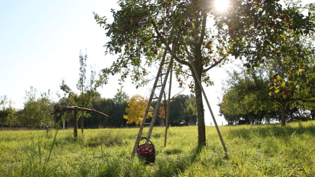 scattered meadow in wittibreut near passau, lower bavaria - apple tree stock videos & royalty-free footage