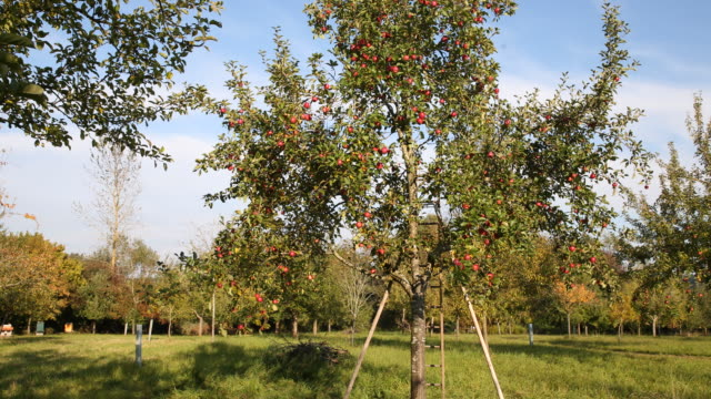scattered meadow in wittibreut near passau, lower bavaria - fruit tree stock videos & royalty-free footage