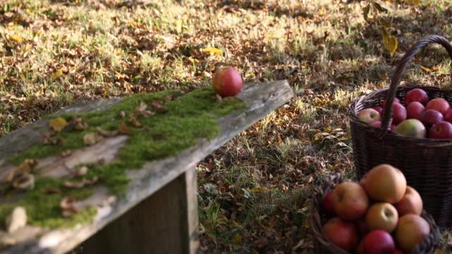scattered meadow in wittibreut near passau, lower bavaria - 籠点の映像素材/bロール