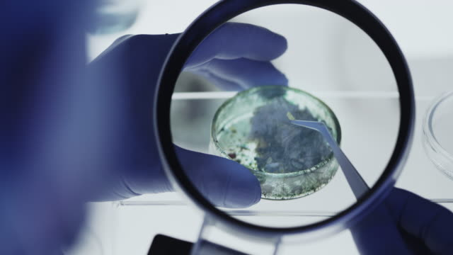 sceintist looking at lab samples in petri dish close up. science laboratory. - piastra petri video stock e b–roll