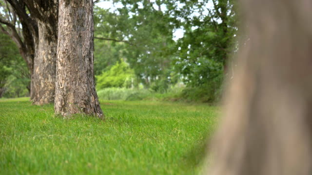 scene dolly shot of grass and tree in the park, concept of green background - dolly shot stock videos & royalty-free footage
