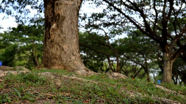 vídeos de stock, filmes e b-roll de tiro da zorra da cena da grama e da árvore no parque, conceito do fundo verde - câmera em movimento