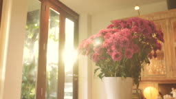 Scene dolly shot of pink chrysanthemum flower in vase in the morning at home, Concept of day in the life objects