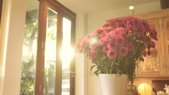 scene dolly shot of pink chrysanthemum flower in vase in the morning at home, concept of day in the life objects - home showcase interior stock videos & royalty-free footage