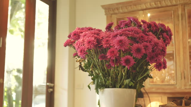 scene dolly shot of pink chrysanthemum flower in vase in the morning at home, concept of day in the life objects - vase stock videos & royalty-free footage