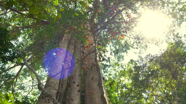 scene light survive trees in the rainforest at asian, concept nature background - copertura di alberi video stock e b–roll