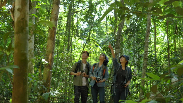 vídeos y material grabado en eventos de stock de escena de un grupo de mochileros asiáticos adolescentes están haciendo senderismo en el bosque y divirtiéndose disfrutando juntos en las vacaciones de verano. son felices y se divierten en las vacaciones, momento de relajación. concepto de la vida coti - ecosistema