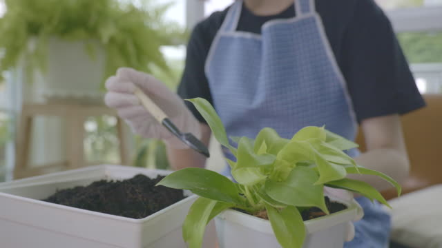 scene of asian woman is loosening and shoveling the soil with a hand for to planting green plant in a pot during quarantine at home with covid-19 pandemic situation - garden fork stock videos & royalty-free footage
