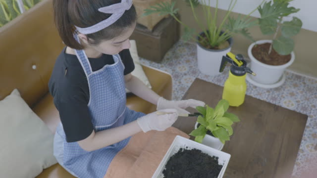 scene of asian woman is loosening and shoveling the soil with a hand for to planting green plant in a pot at home, concept of home improvements inside and out - garden fork stock videos & royalty-free footage