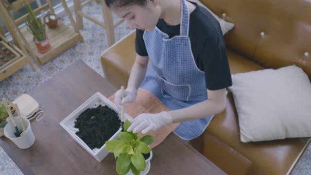 アジアの女性のシーンは、covid-19パンデミック状況、屋内庭園の概念と自宅で検疫中にポットに緑の植物を植えるために手で土壌を緩め、シャベルしています - ガーデニング点の映像素材/bロール