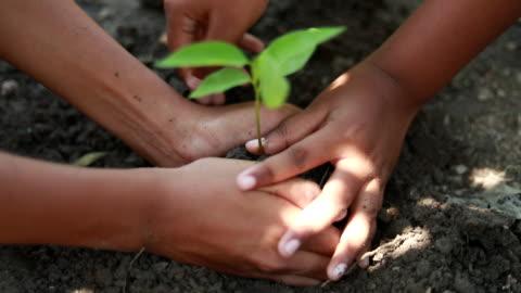scene of boys plantera ett nytt träd, koncept rädda jorden, rädda världen, rädda planeten, ekologi koncept - plantera bildbanksvideor och videomaterial från bakom kulisserna
