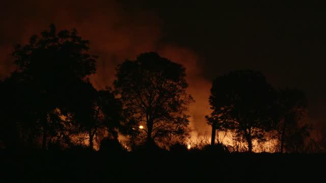vídeos y material grabado en eventos de stock de escena del desastre de incendio forestal está quemando causas - quemar