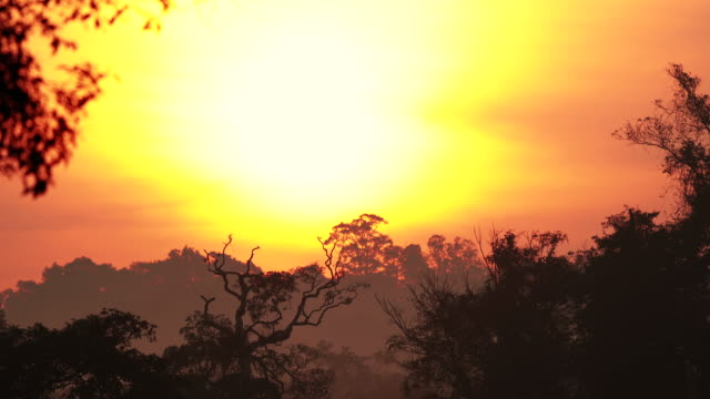 scene of sunrise in the rainforest with animal sounds, nature background - temperate rainforest stock videos & royalty-free footage