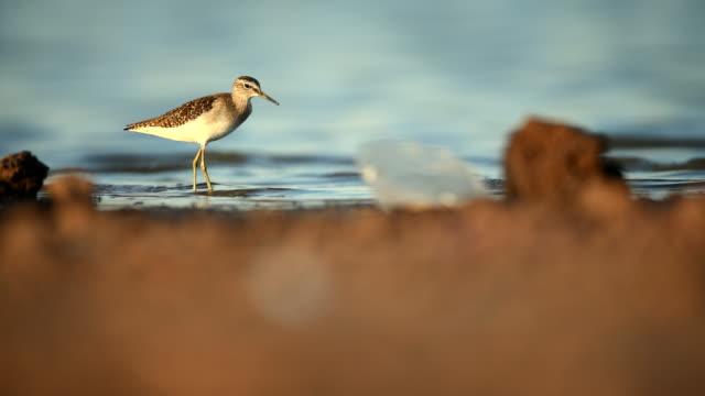 szene von wasservogel entlang im sumpf, tier in freier wildbahn - water bird stock-videos und b-roll-filmmaterial