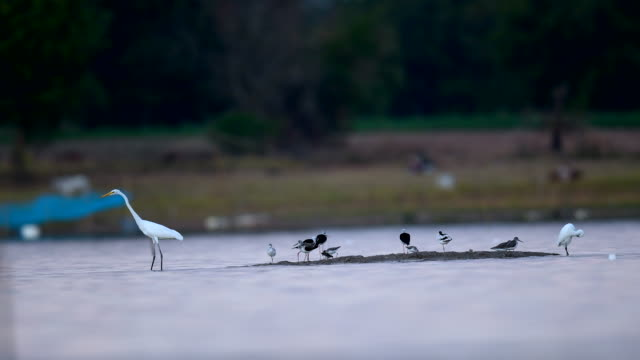 scene of water bird in the lake, animal in the wild - water bird stock videos & royalty-free footage