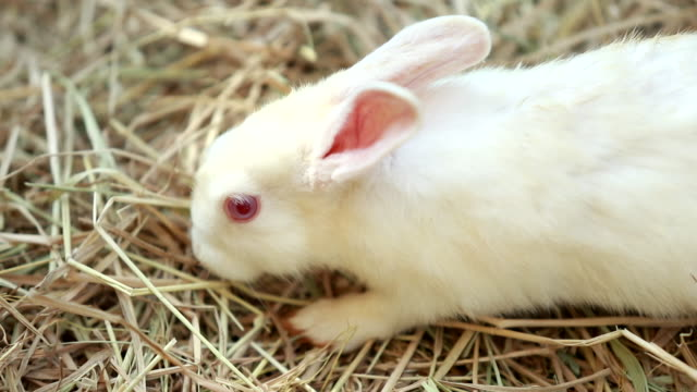 scene slow motion cute of rabbits on animal farm - cottontail stock videos & royalty-free footage