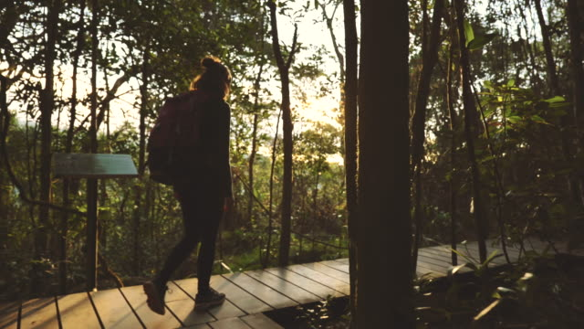 scene slow motion of backpacker woman a hikers in forest - rainforest stock videos & royalty-free footage