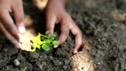 Scene slow motion of boys planting a new tree, concept save the earth, save the world, save planet, ecology concept