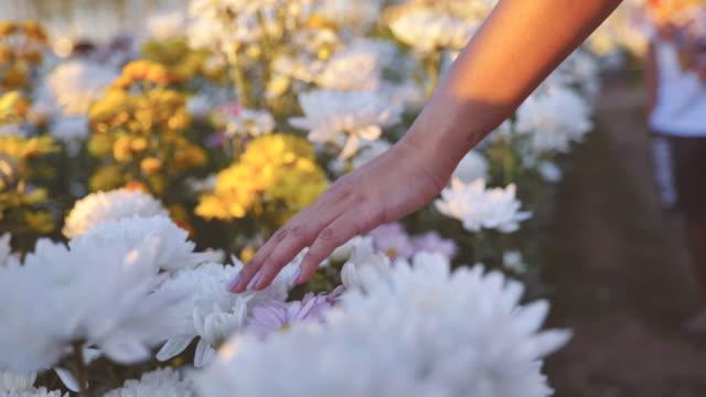 vídeos y material grabado en eventos de stock de escena de movimiento lento de la mano femenina tocando la flor colorida floreciendo - alto descripción física