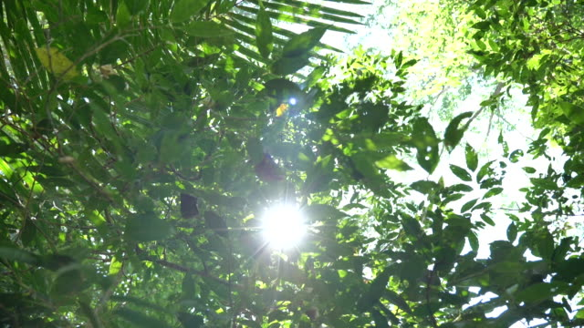 scene slow motion of light survive trees in the rainforest at asian, concept nature background - nature reserve stock videos & royalty-free footage